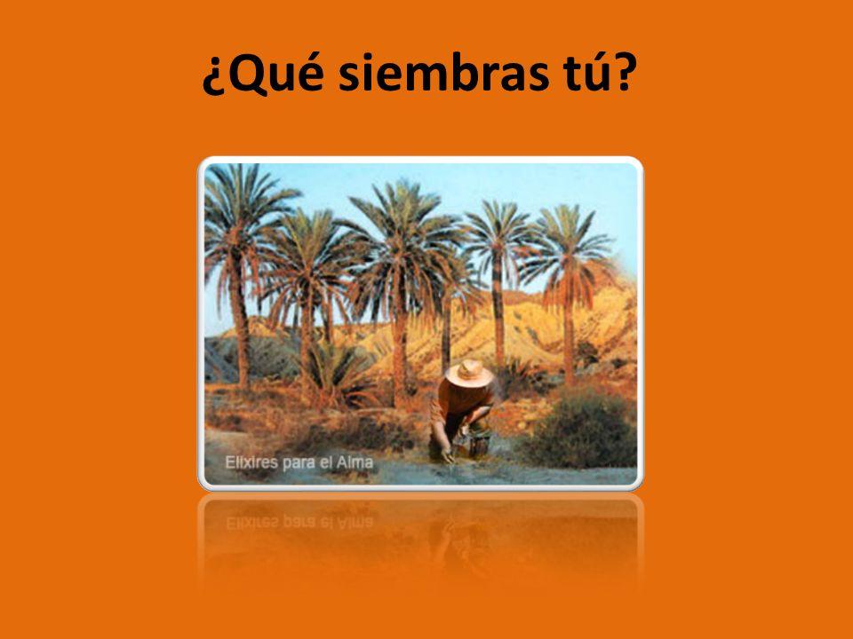 1.EXPOSICIÓN En un oasis escondido entre los más lejanos paisajes del desierto, se encontraba el viejo ELIAHU de rodillas, a un costado de algunas palmeras datileras.