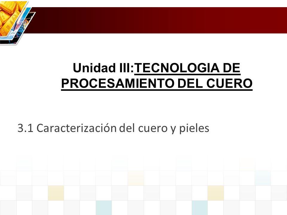 3.1 Caracterización del cuero y pieles Unidad III:TECNOLOGIA DE PROCESAMIENTO DEL CUERO