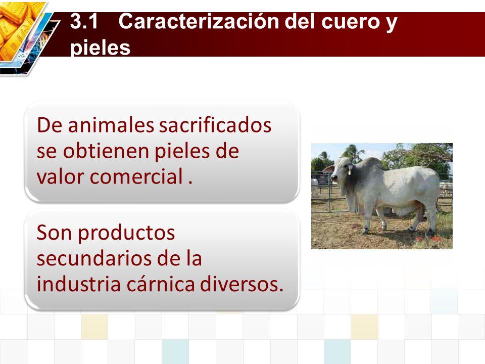 3.1Caracterización del cuero y pieles De animales sacrificados se obtienen pieles de valor comercial. Son productos secundarios de la industria cárnic