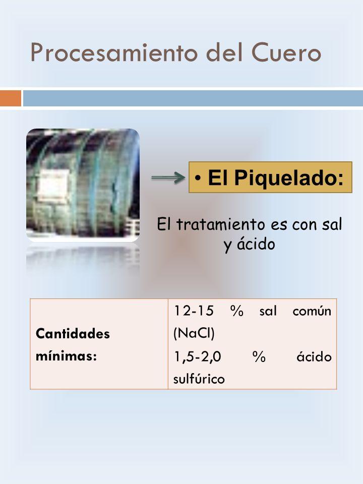 Procesamiento del Cuero El Piquelado: El tratamiento es con sal y ácido Cantidades mínimas: 12-15 % sal común (NaCl) 1,5-2,0 % ácido sulfúrico