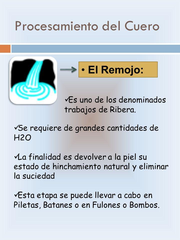 Procesamiento del Cuero El Remojo: Es uno de los denominados trabajos de Ribera. Se requiere de grandes cantidades de H2O La finalidad es devolver a l