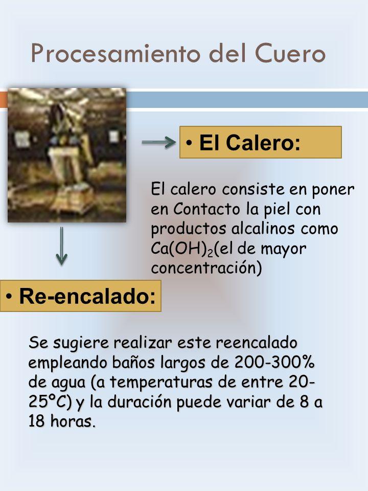 El Calero: El calero consiste en poner en Contacto la piel con productos alcalinos como Ca(OH) 2 (el de mayor concentración) Re-encalado: Se sugiere r