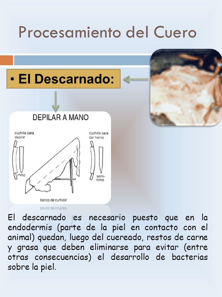 Procesamiento del Cuero El Descarnado: El descarnado es necesario puesto que en la endodermis (parte de la piel en contacto con el animal) quedan, lue