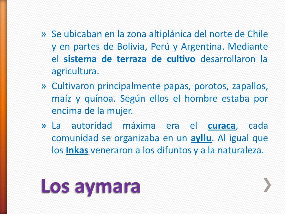 » Se ubicaban en la zona altiplánica del norte de Chile y en partes de Bolivia, Perú y Argentina. Mediante el sistema de terraza de cultivo desarrolla