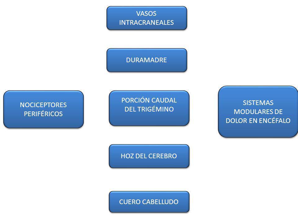 NOCICEPTORES PERIFÉRICOS NOCICEPTORES PERIFÉRICOS SISTEMAS MODULARES DE DOLOR EN ENCÉFALO CUERO CABELLUDO HOZ DEL CEREBRO PORCIÓN CAUDAL DEL TRIGÉMINO PORCIÓN CAUDAL DEL TRIGÉMINO DURAMADRE VASOS INTRACRANEALES VASOS INTRACRANEALES