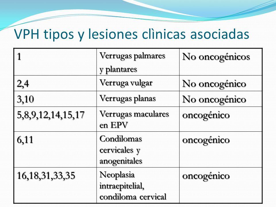 VPH tipos y lesiones clìnicas asociadas 1 Verrugas palmares y plantares No oncogénicos 2,4 Verruga vulgar No oncogénico 3,10 Verrugas planas No oncogé