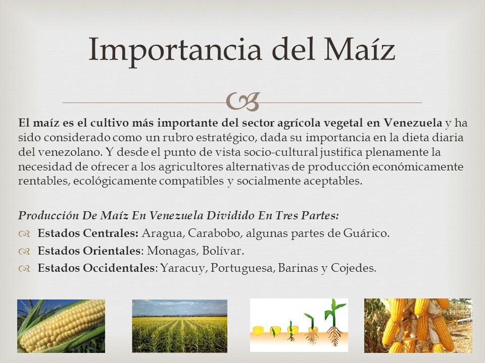 El maíz es el cultivo más importante del sector agrícola vegetal en Venezuela y ha sido considerado como un rubro estratégico, dada su importancia en la dieta diaria del venezolano.
