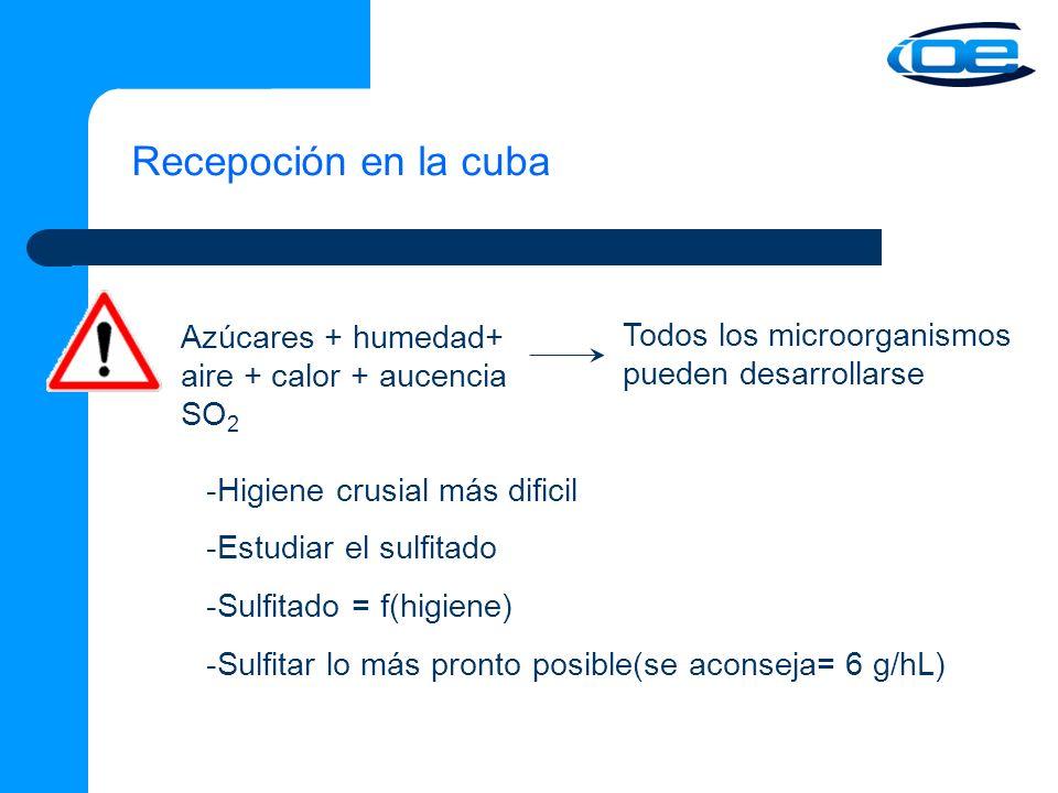 Recepoción en la cuba -Higiene crusial más dificil -Estudiar el sulfitado -Sulfitado = f(higiene) -Sulfitar lo más pronto posible(se aconseja= 6 g/hL) Azúcares + humedad+ aire + calor + aucencia SO 2 Todos los microorganismos pueden desarrollarse