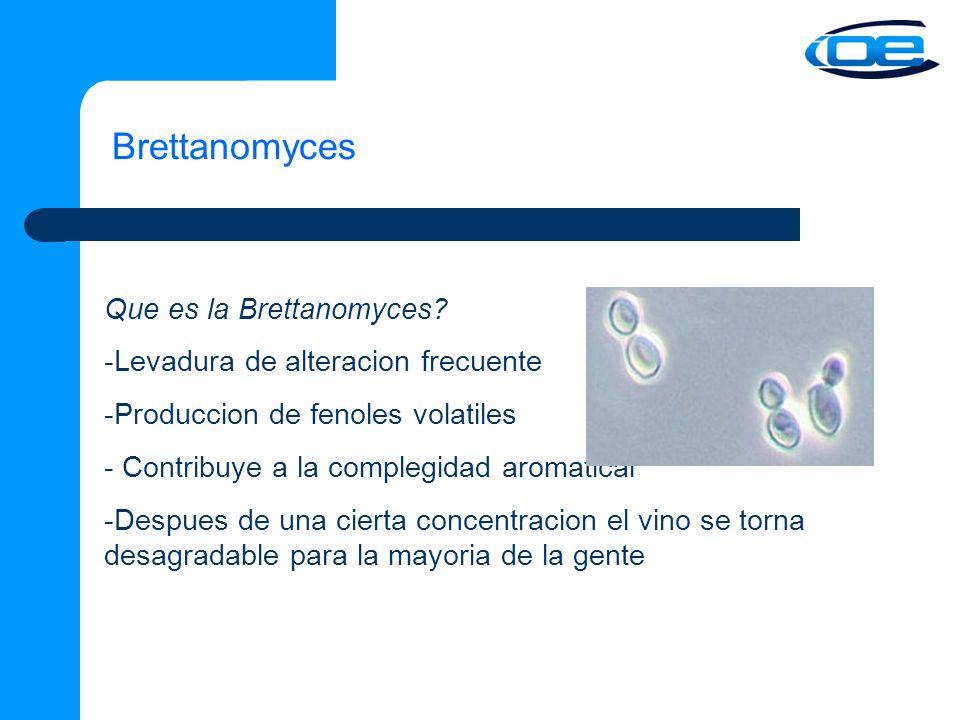 Brettanomyces Que es la Brettanomyces.