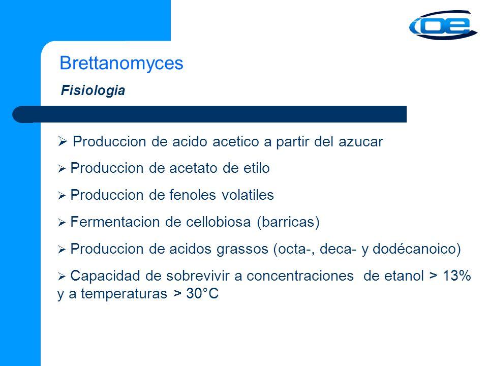 Brettanomyces Produccion de acido acetico a partir del azucar Produccion de acetato de etilo Produccion de fenoles volatiles Fermentacion de cellobiosa (barricas) Produccion de acidos grassos (octa-, deca- y dodécanoico) Capacidad de sobrevivir a concentraciones de etanol > 13% y a temperaturas > 30°C Fisiologia