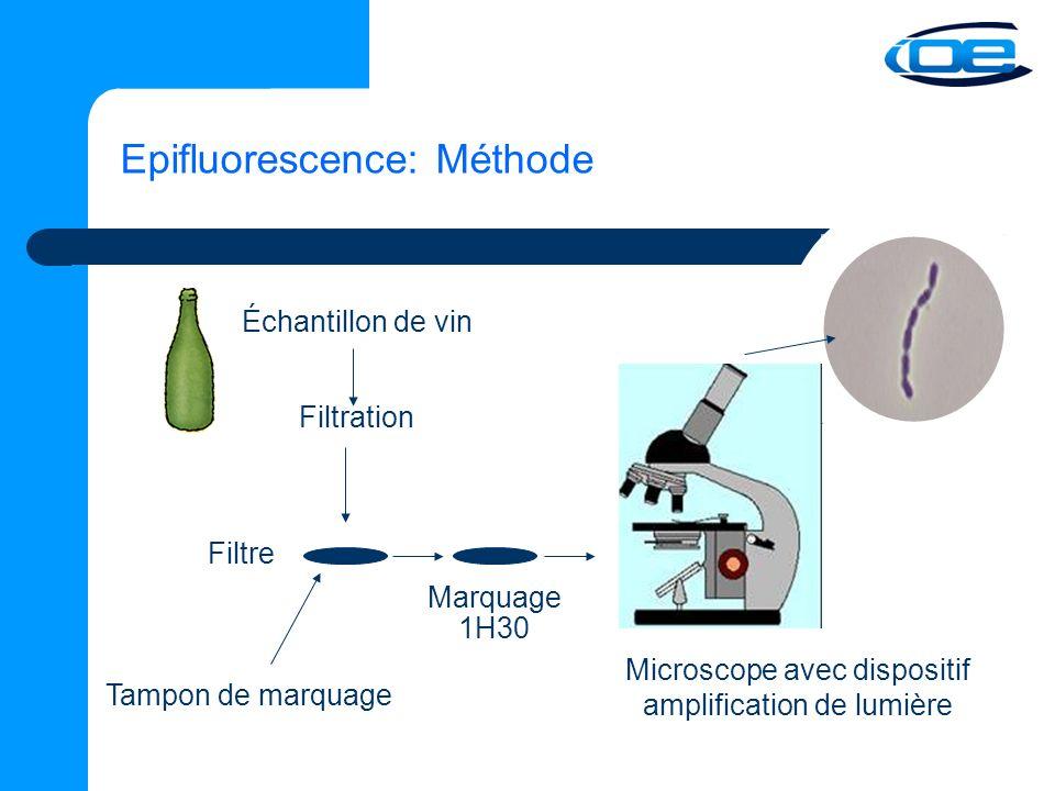 Epifluorescence: Méthode Échantillon de vin Filtration Filtre Tampon de marquage Marquage 1H30 Microscope avec dispositif amplification de lumière