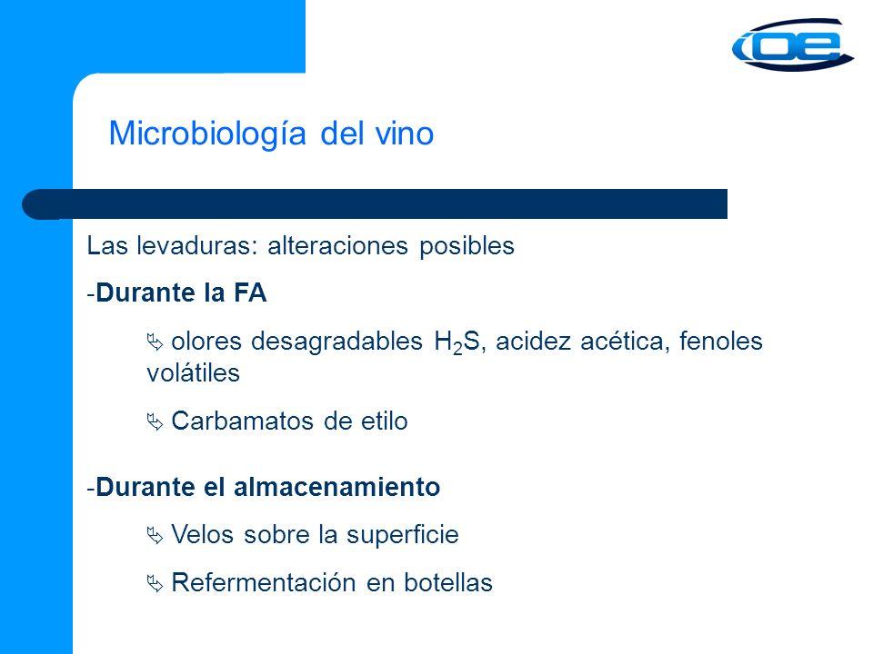 Microbiología del vino Las levaduras: alteraciones posibles -Durante la FA olores desagradables H 2 S, acidez acética, fenoles volátiles Carbamatos de etilo -Durante el almacenamiento Velos sobre la superficie Refermentación en botellas