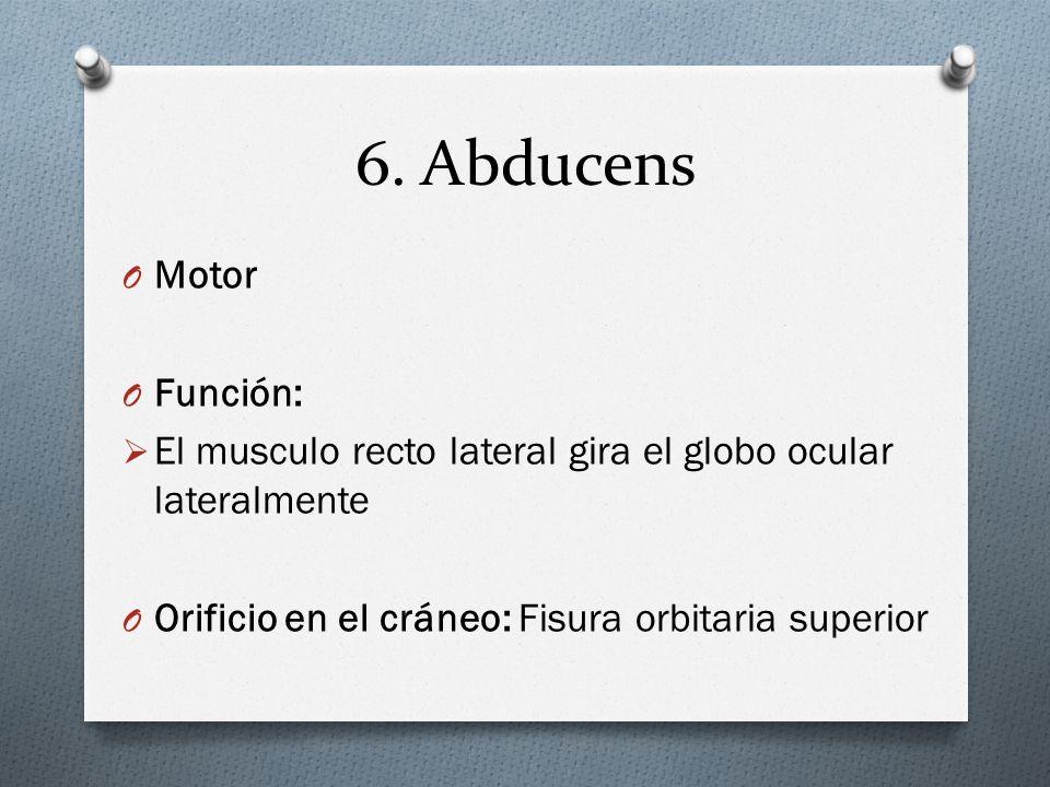 6. Abducens O Motor O Función: El musculo recto lateral gira el globo ocular lateralmente O Orificio en el cráneo: Fisura orbitaria superior