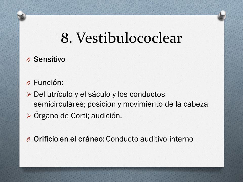 8. Vestibulococlear O Sensitivo O Función: Del utrículo y el sáculo y los conductos semicirculares; posicion y movimiento de la cabeza Órgano de Corti