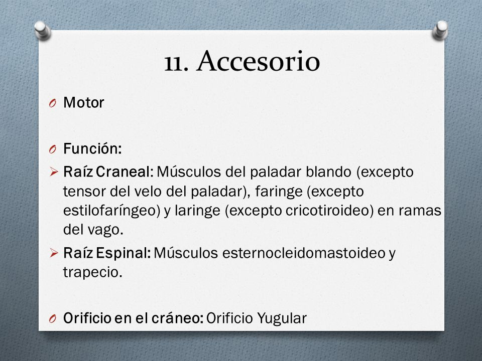11. Accesorio O Motor O Función: Raíz Craneal: Músculos del paladar blando (excepto tensor del velo del paladar), faringe (excepto estilofaríngeo) y l