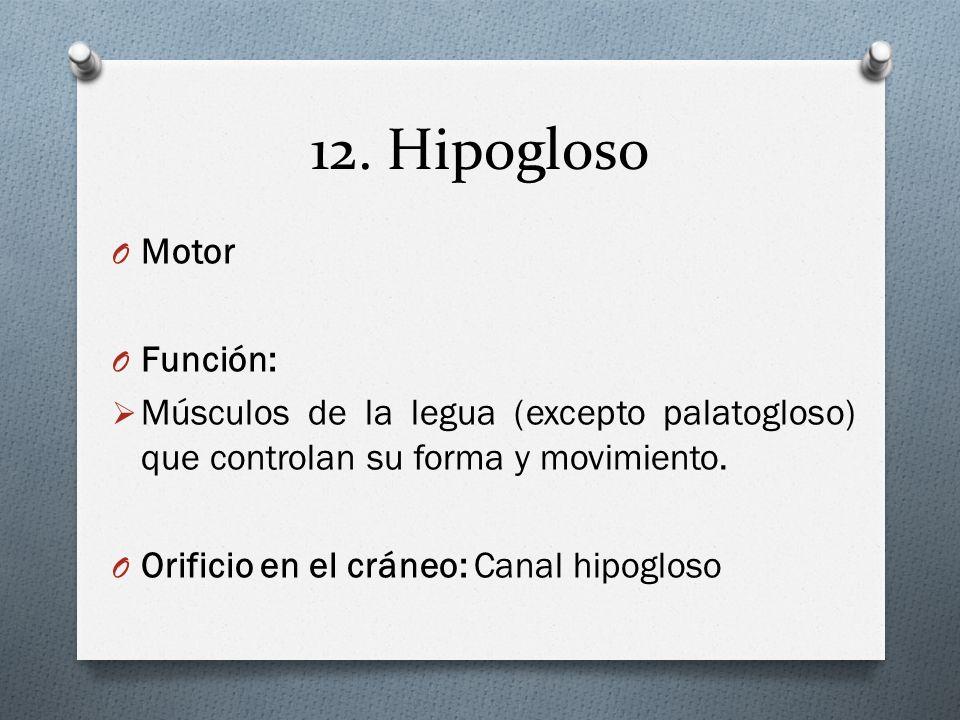 12. Hipogloso O Motor O Función: Músculos de la legua (excepto palatogloso) que controlan su forma y movimiento. O Orificio en el cráneo: Canal hipogl