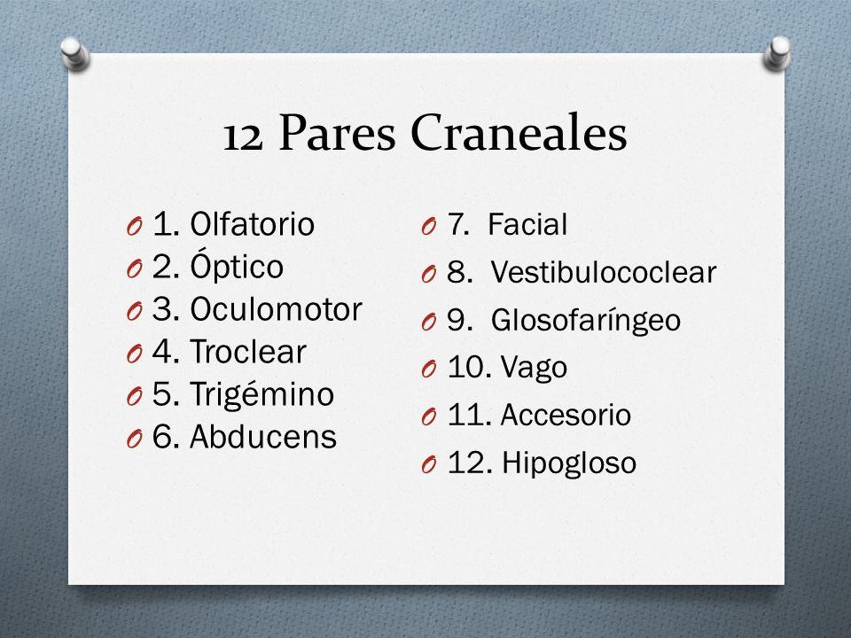 12 Pares Craneales O 1. Olfatorio O 2. Óptico O 3. Oculomotor O 4. Troclear O 5. Trigémino O 6. Abducens O 7. Facial O 8. Vestibulococlear O 9. Glosof