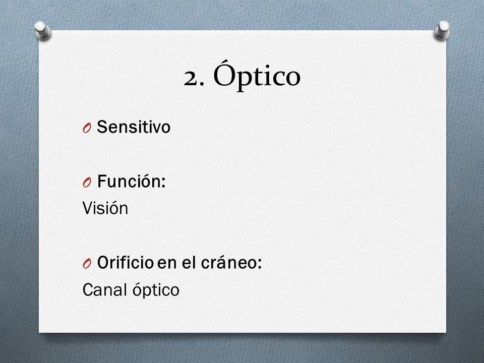 2. Óptico O Sensitivo O Función: Visión O Orificio en el cráneo: Canal óptico
