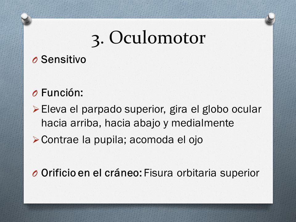 3. Oculomotor O Sensitivo O Función: Eleva el parpado superior, gira el globo ocular hacia arriba, hacia abajo y medialmente Contrae la pupila; acomod