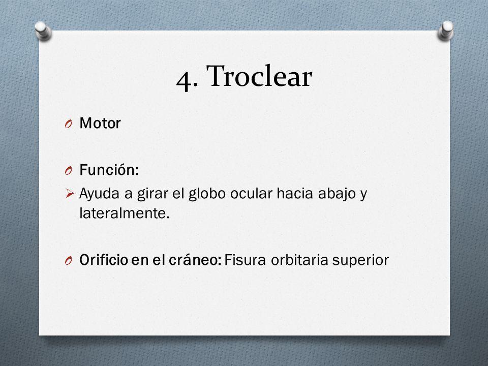 4. Troclear O Motor O Función: Ayuda a girar el globo ocular hacia abajo y lateralmente. O Orificio en el cráneo: Fisura orbitaria superior
