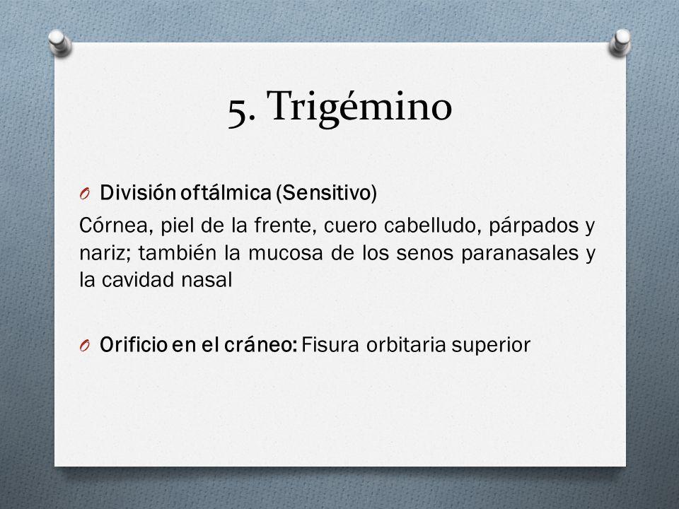 5. Trigémino O División oftálmica (Sensitivo) Córnea, piel de la frente, cuero cabelludo, párpados y nariz; también la mucosa de los senos paranasales