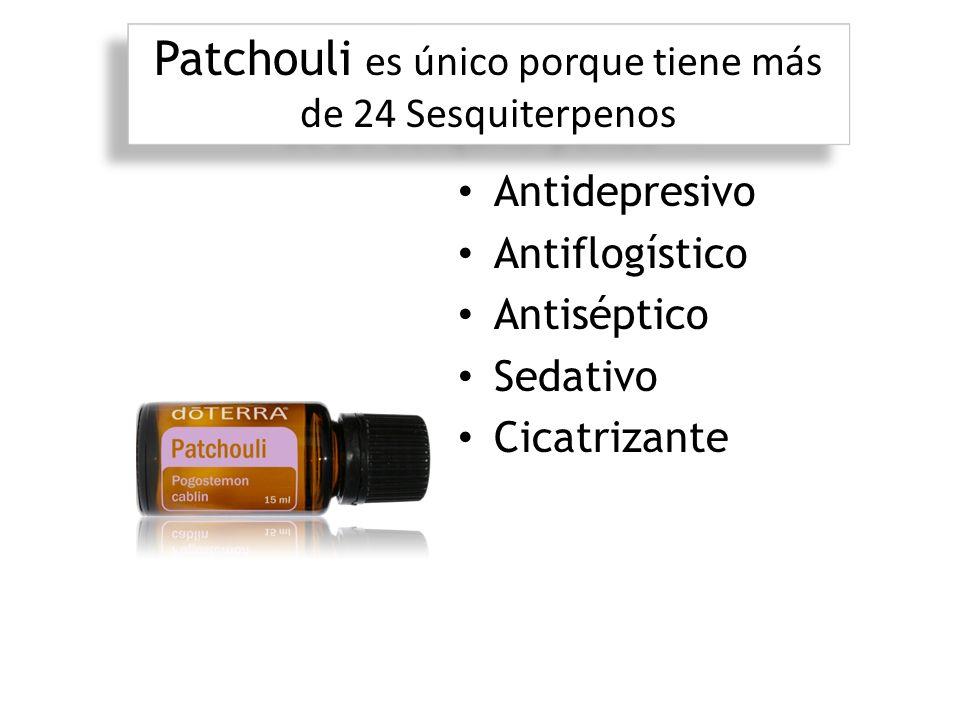 Patchouli es único porque tiene más de 24 Sesquiterpenos Antidepresivo Antiflogístico Antiséptico Sedativo Cicatrizante