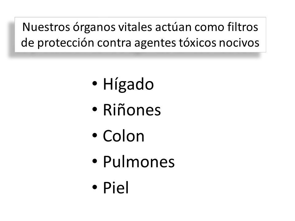 Hígado Riñones Colon Pulmones Piel Nuestros órganos vitales actúan como filtros de protección contra agentes tóxicos nocivos