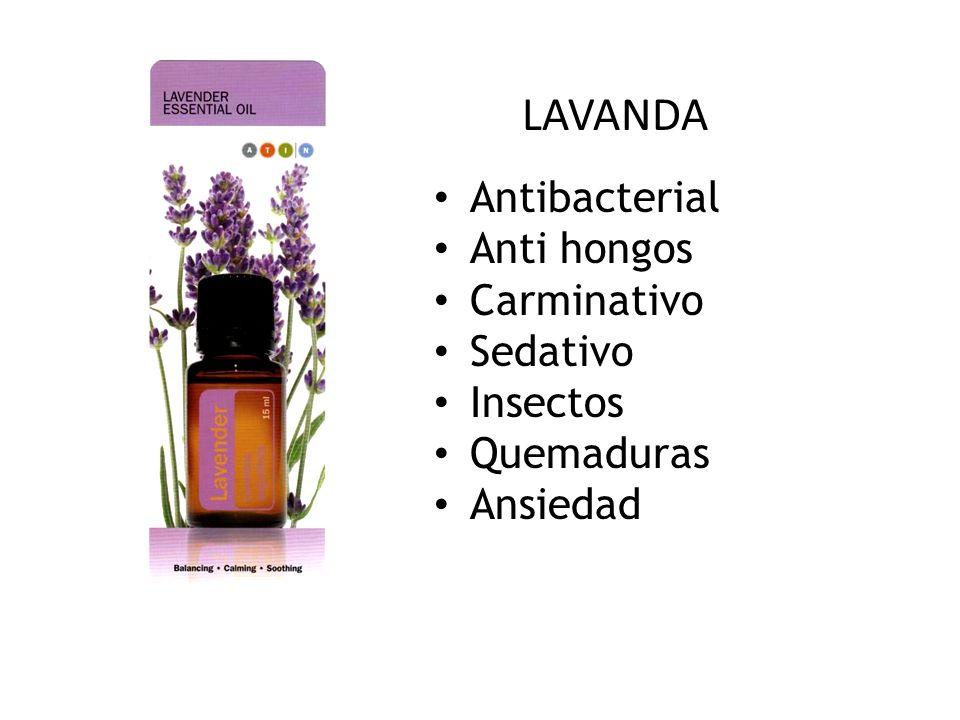 Antibacterial Anti hongos Carminativo Sedativo Insectos Quemaduras Ansiedad LAVANDA