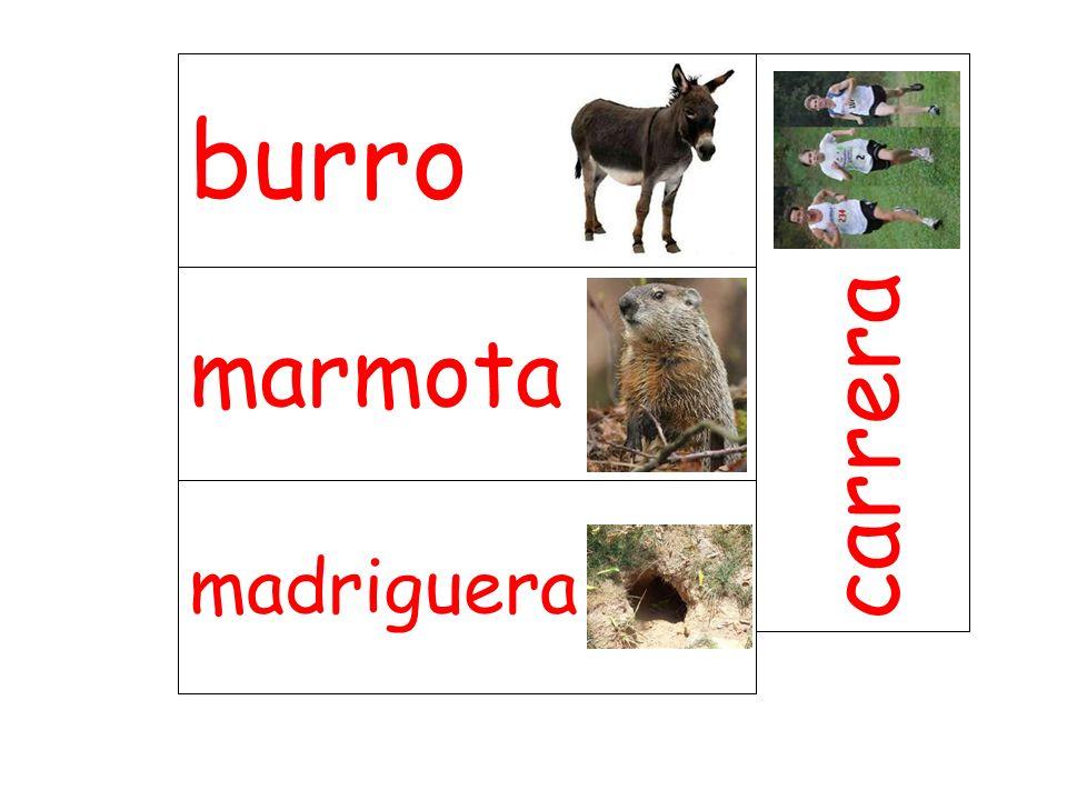 marmota carrera madriguera burro