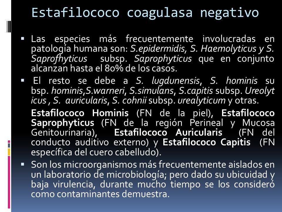 Estafilococo coagulasa negativo Las especies más frecuentemente involucradas en patología humana son: S.epidermidis, S. Haemolyticus y S. Saprofhyticu