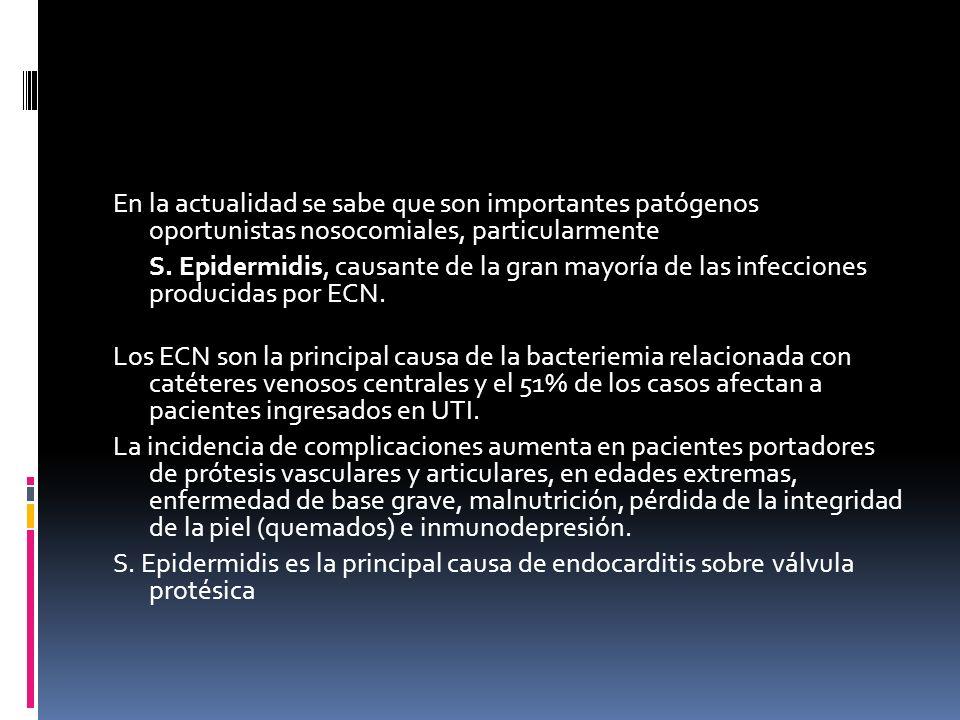 En la actualidad se sabe que son importantes patógenos oportunistas nosocomiales, particularmente S. Epidermidis, causante de la gran mayoría de las i