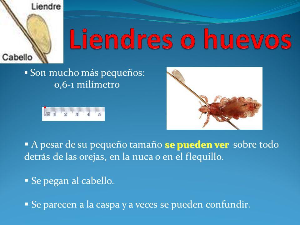 Son mucho más pequeños: 0,6-1 milímetro se pueden ver A pesar de su pequeño tamaño se pueden ver sobre todo detrás de las orejas, en la nuca o en el f