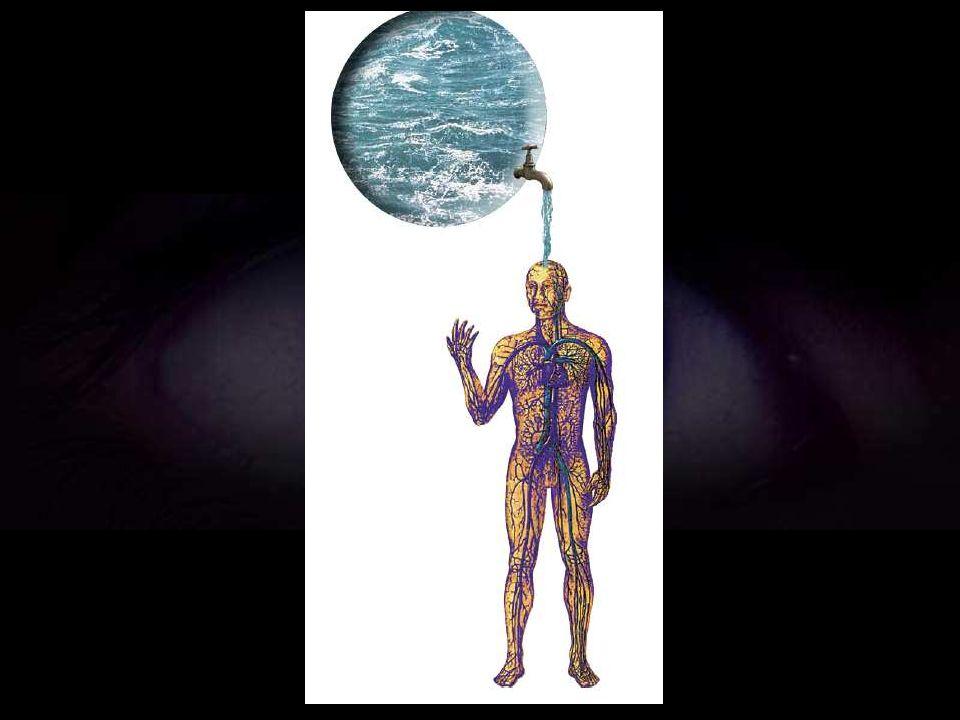 Es como si, a lo largo del proceso evolutivo, los seres vivos hubieran ido transformando el mar, primordial fuente de sustancias nutrientes, en savia,