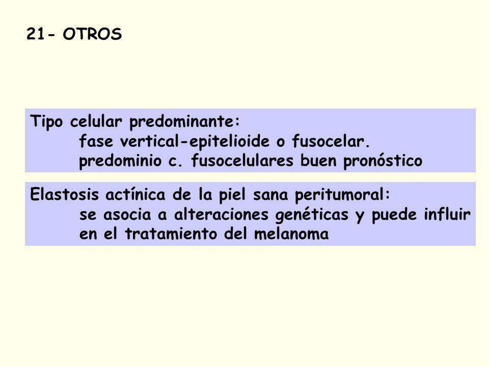 21- OTROS Tipo celular predominante: fase vertical-epitelioide o fusocelar.
