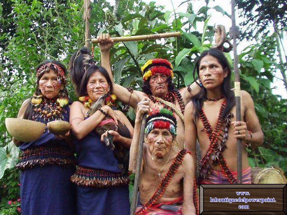 Los Shuar son el pueblo amazónico más numeroso (aproximadamente de 80.000 individuos). Habitan entre las selvas del Perú y Ecuador. Los conquistadores