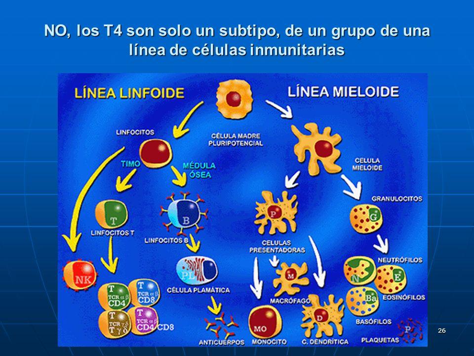 26 NO, los T4 son solo un subtipo, de un grupo de una línea de células inmunitarias