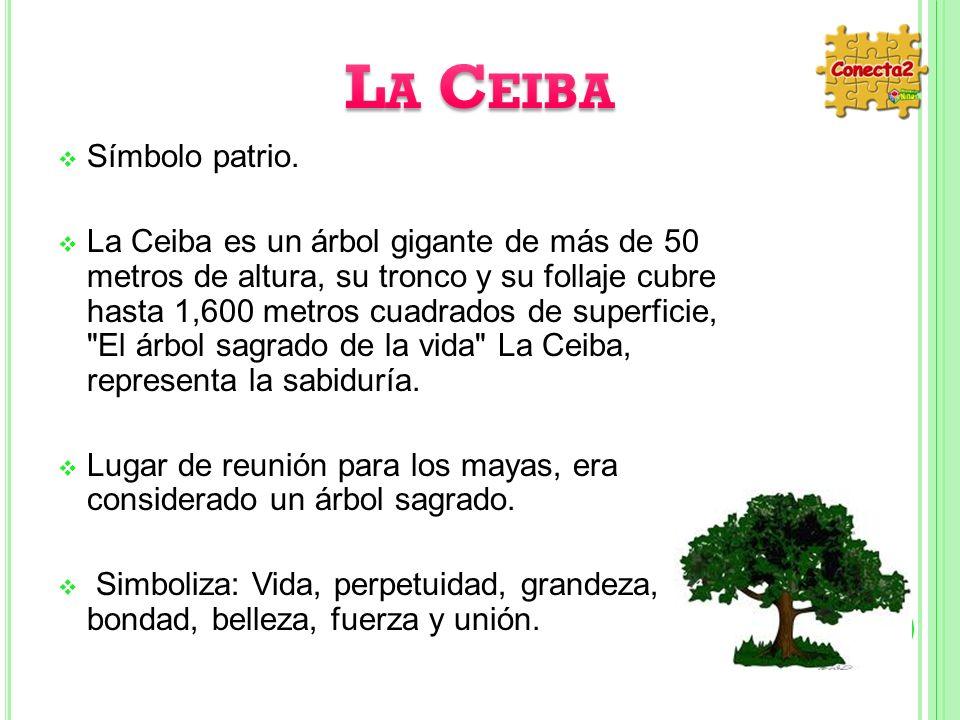 Símbolo patrio. La Ceiba es un árbol gigante de más de 50 metros de altura, su tronco y su follaje cubre hasta 1,600 metros cuadrados de superficie,