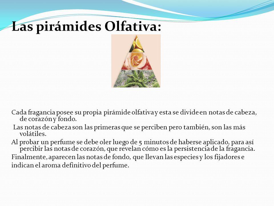 Las pirámides Olfativa: Cada fragancia posee su propia pirámide olfativa y esta se divide en notas de cabeza, de corazón y fondo. Las notas de cabeza