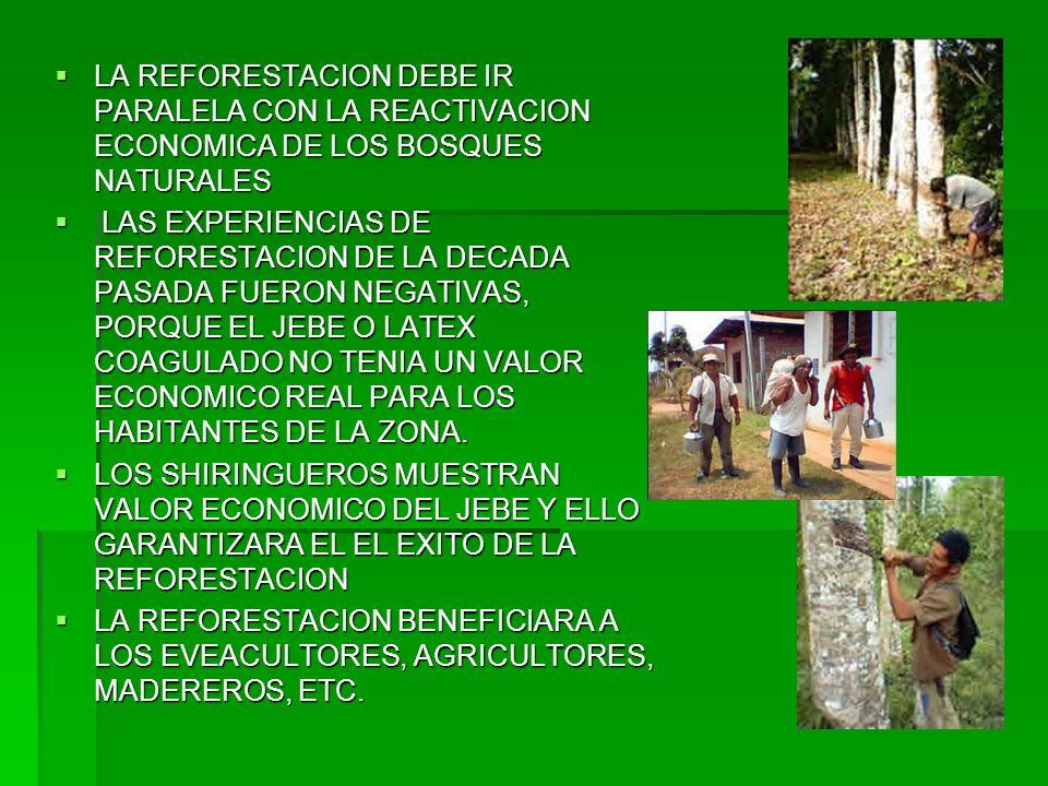 LA REFORESTACION DEBE IR PARALELA CON LA REACTIVACION ECONOMICA DE LOS BOSQUES NATURALES LA REFORESTACION DEBE IR PARALELA CON LA REACTIVACION ECONOMI
