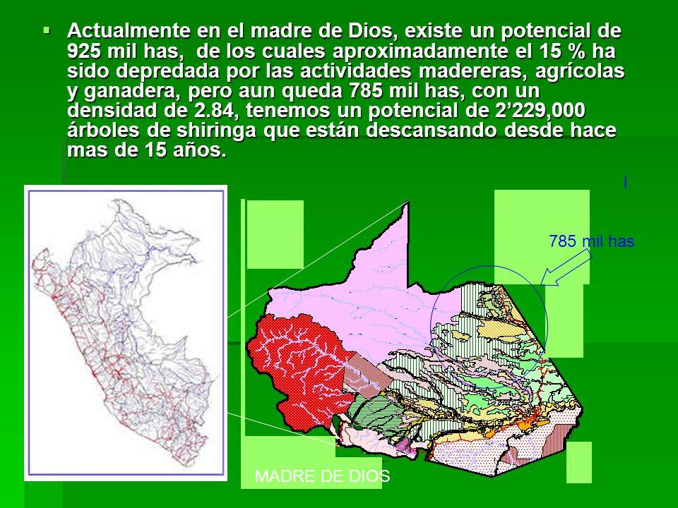 En la provincia de Tahuamanu se tiene 405 colocaciones identificadas aptas para la producción del látex y 310 familias han confirmado su disponibilidad de regresar/ingresar al bosque a trabajar la shiringa.