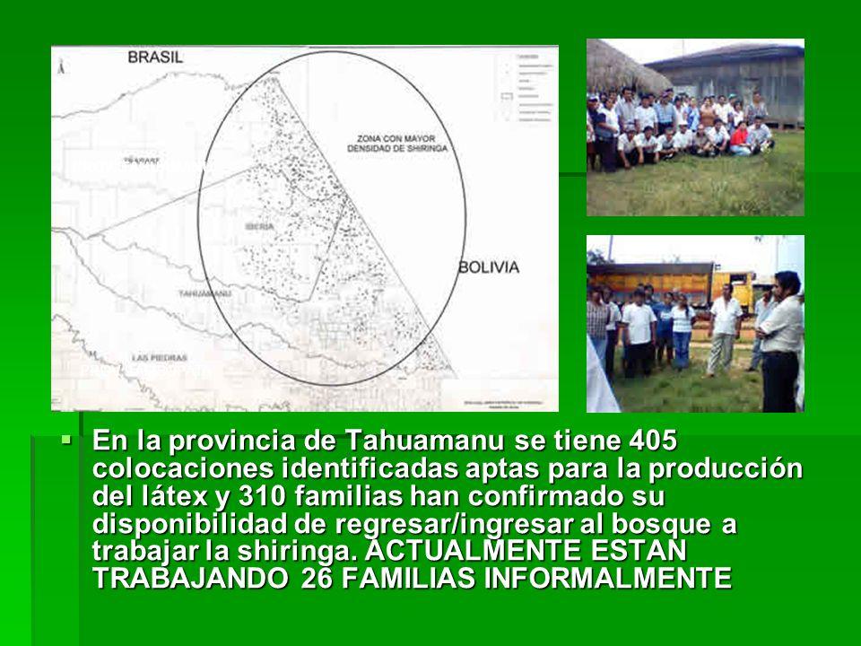 En la provincia de Tahuamanu se tiene 405 colocaciones identificadas aptas para la producción del látex y 310 familias han confirmado su disponibilida