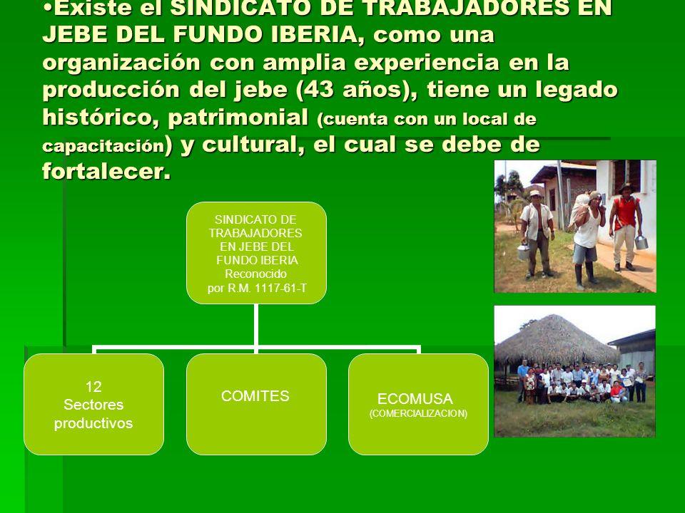 Existe el SINDICATO DE TRABAJADORES EN JEBE DEL FUNDO IBERIA, como una organización con amplia experiencia en la producción del jebe (43 años), tiene