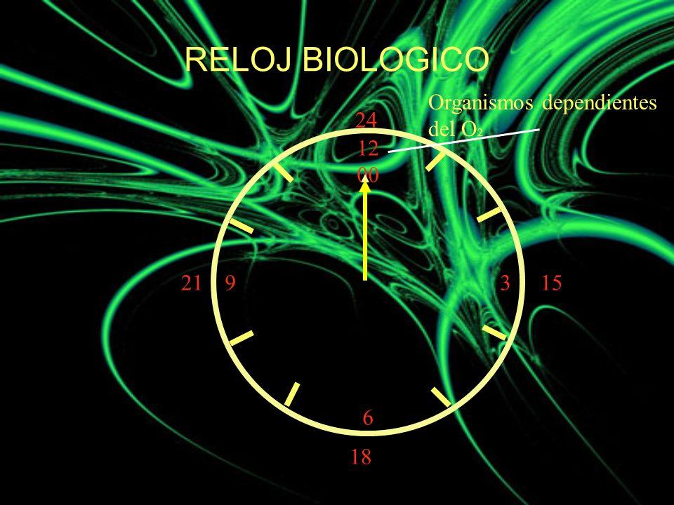 12 00 9 3 6 15 18 21 24 Organismos dependientes del O 2 RELOJ BIOLOGICO