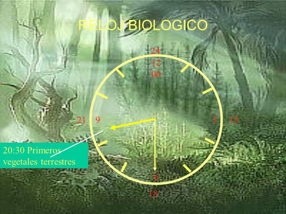 12 00 9 3 6 15 18 21 24 20:00 Moluscos RELOJ BIOLOGICO