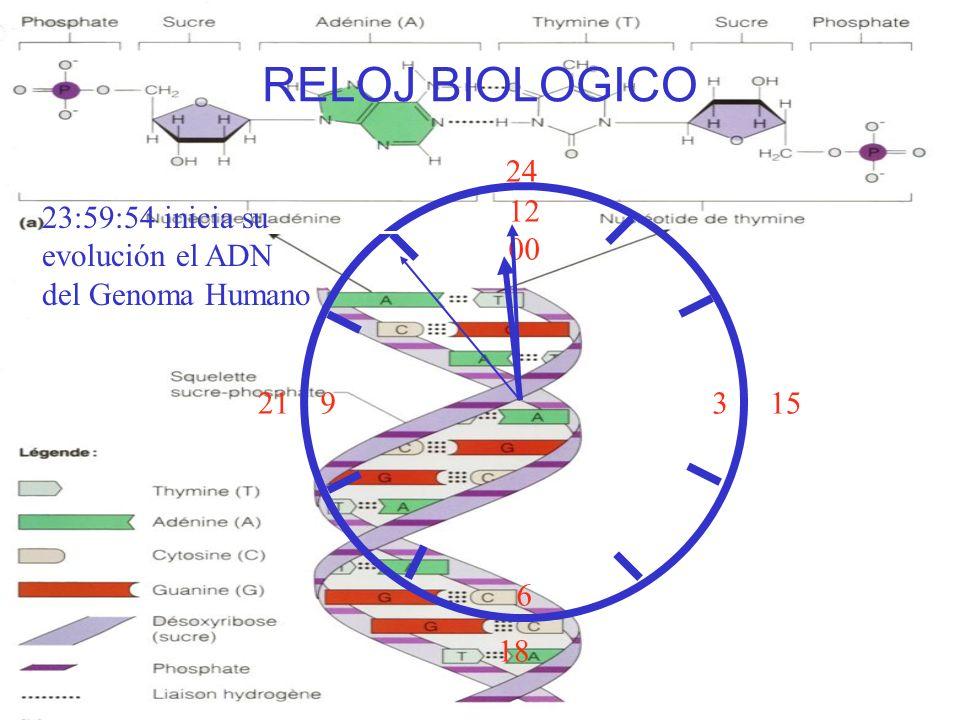 12 00 9 3 6 15 18 21 24 RELOJ BIOLOGICO 23:59:54 inicia su evolución el ADN del Genoma Humano