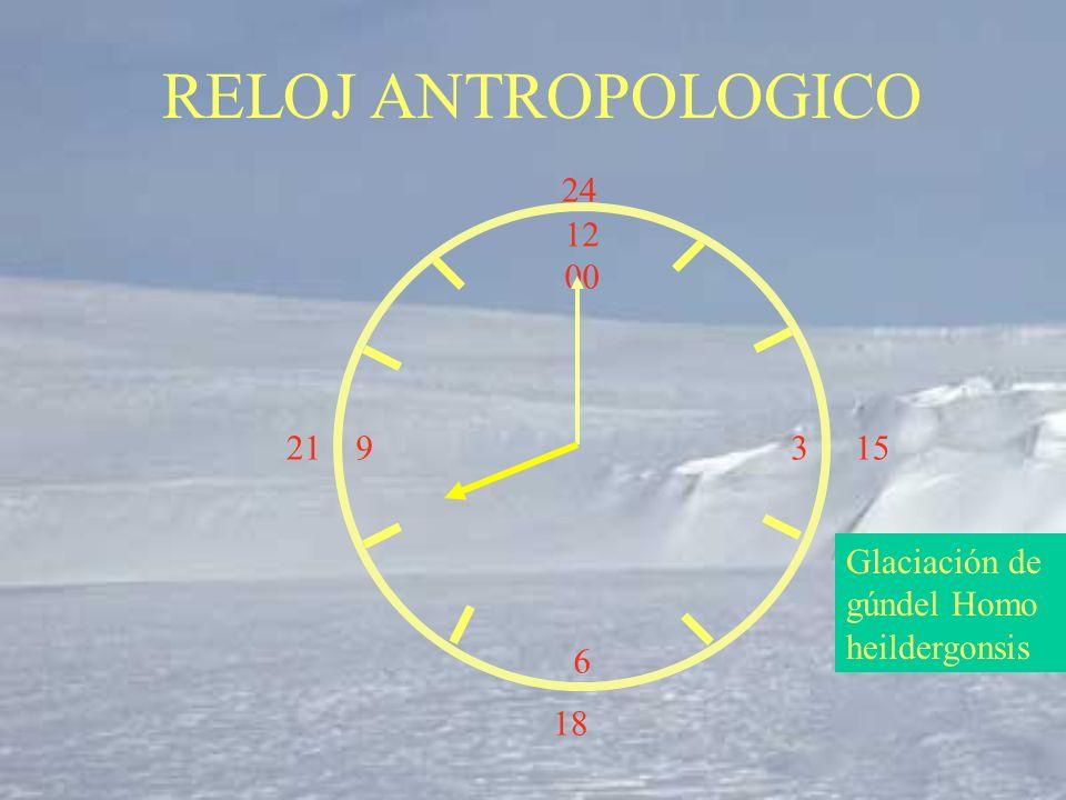 12 00 9 3 6 15 18 21 24 Glaciación de gúndel Homo heildergonsis RELOJ ANTROPOLOGICO