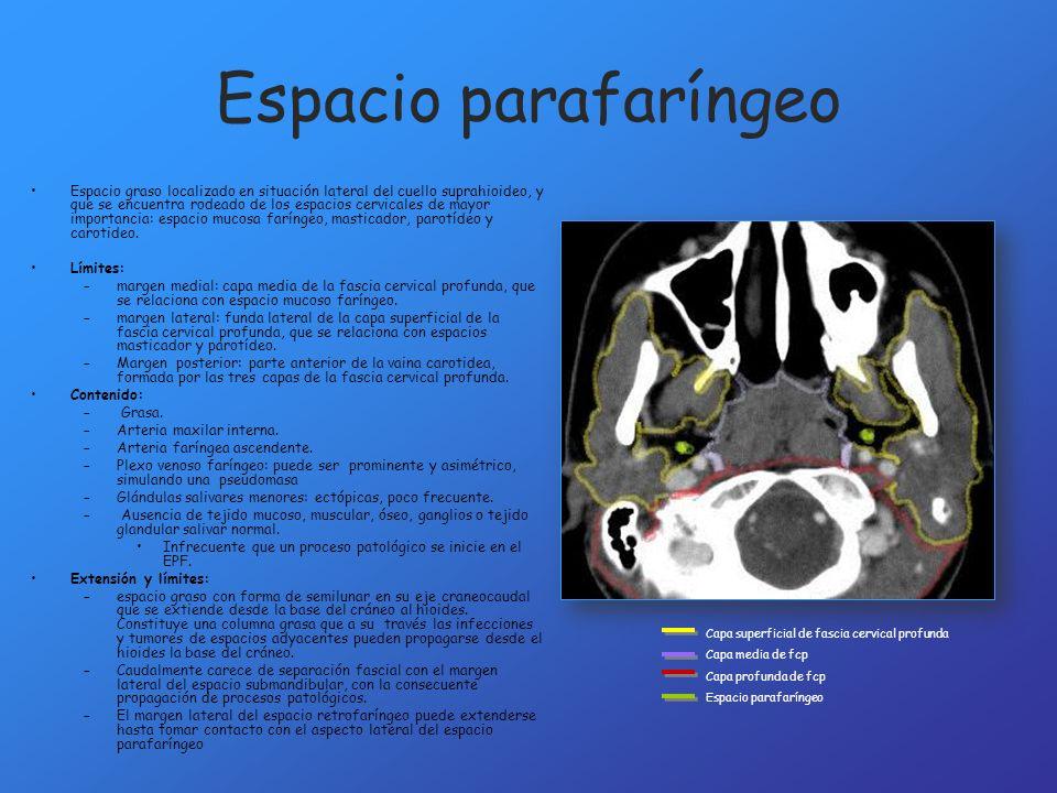 Espacio parafaríngeo Espacio graso localizado en situación lateral del cuello suprahioideo, y que se encuentra rodeado de los espacios cervicales de m