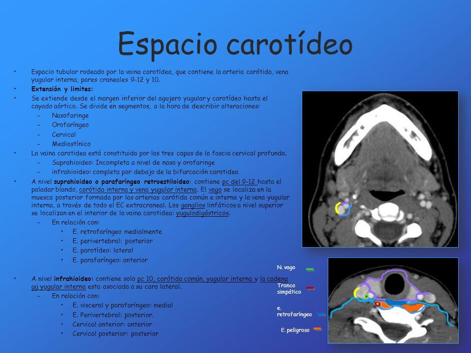 Espacio carotídeo Espacio tubular rodeado por la vaina carotídea, que contiene la arteria carótida, vena yugular interna, pares craneales 9-12 y 10. E