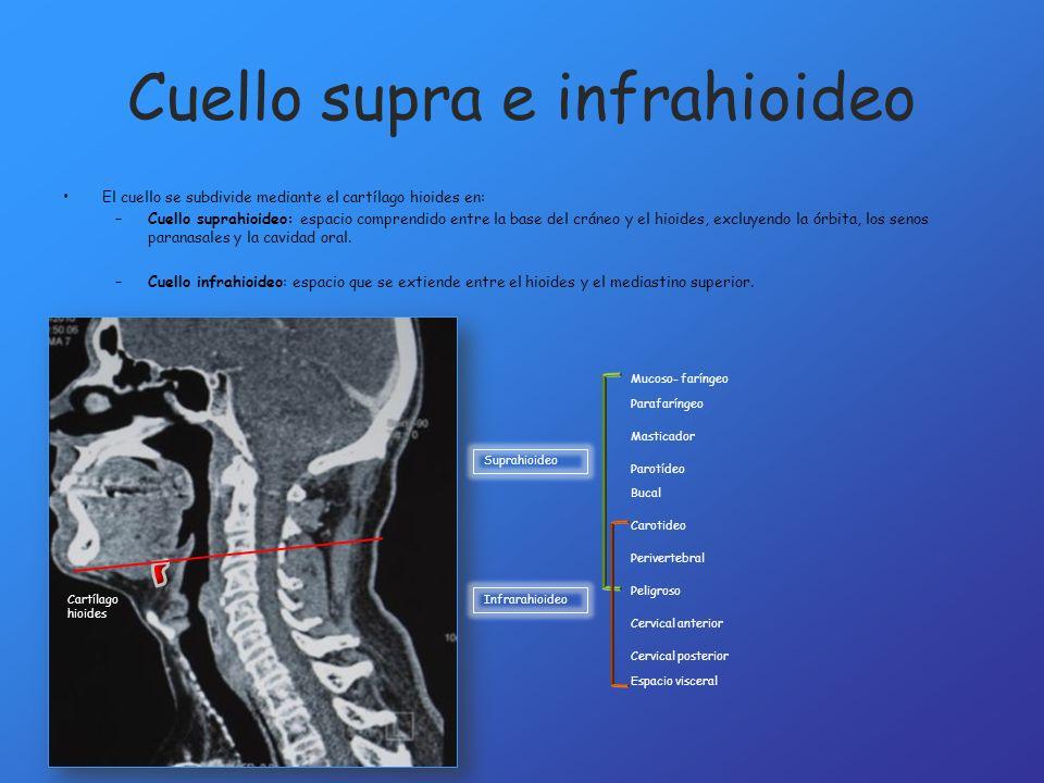 Cuello supra e infrahioideo El cuello se subdivide mediante el cartílago hioides en: –Cuello suprahioideo: espacio comprendido entre la base del cráne
