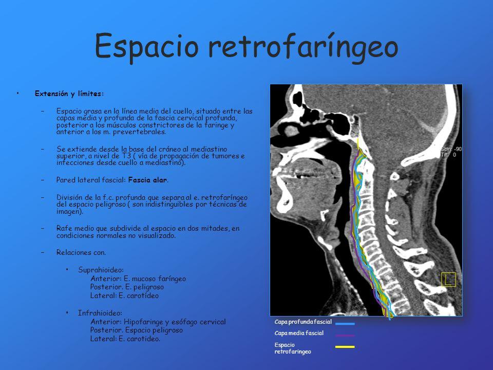 Espacio retrofaríngeo Extensión y límites: –Espacio grasa en la línea media del cuello, situado entre las capas media y profunda de la fascia cervical